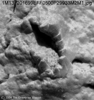 Crinoid like Fossil found on Mars by Opportunity rover